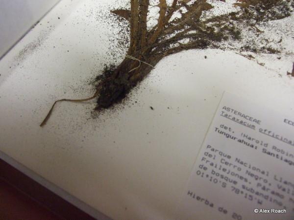 Frass to plant specimen