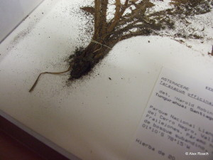 Frass to plant specimen